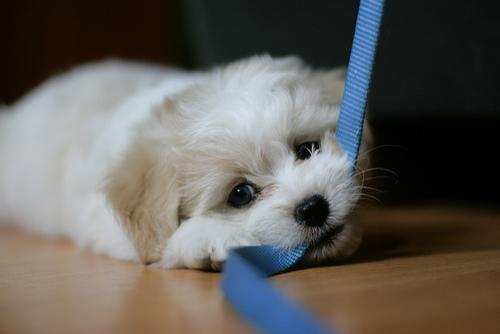 dog-pulling-leash-skilos travaei louri2