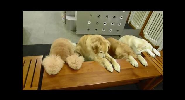 skulia dogs dog skuloi video proseuxontai kina