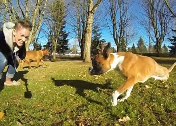 two-leg-dog